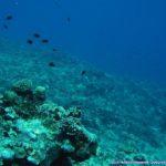 米原Wリ-フ東サンゴの城